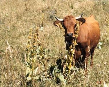 Des exploitations agricoles plus autonomes qui s'adaptent mieux au changement climatique
