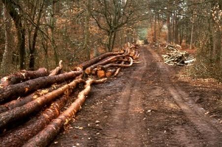 Des outils pour évaluer les effets d'une coupe en forêt