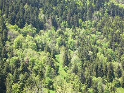 Les nouvelles technologies du LIDAR pour réaliser un inventaire forestier