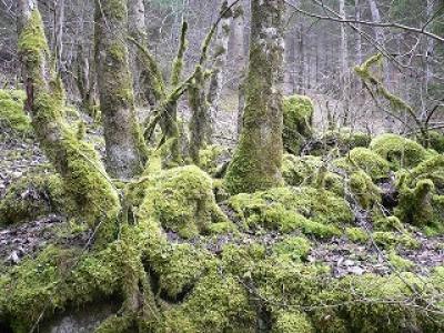 Un protocole de terrain simplifié pour identifier les forêts matures