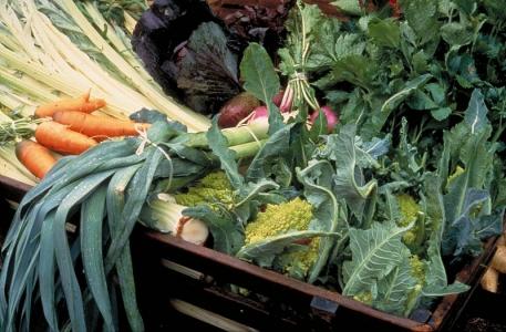 Comprendre et accompagner les nouvelles initiatives et stratégies alimentaires pour les territoires
