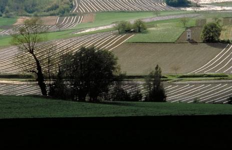 Recomposition du rapport Propriété / Usage agricole du foncier : Enjeux agricoles et territoriaux
