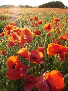 L'agroécologie : journée d'échanges et de réflexion
