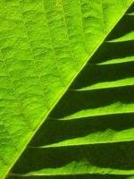 9114-0054-nervures feuilles-72dpi vignette